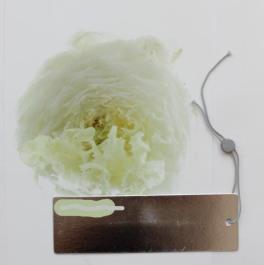collagen_2012-19-Bearbeitet