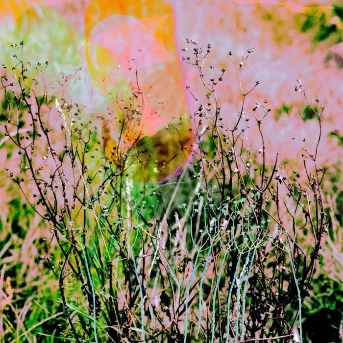 pflanzenportrait03
