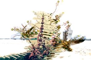 PLANT_FRAGMENTSG